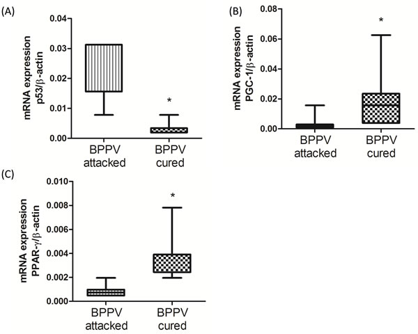 Expression levels of SIRT1 downstream genes in BPPV-attacked and BPPV-cured patients after treatment of maneuver exercise.
