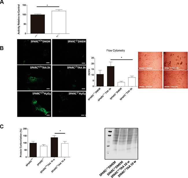 Endogenous reactive oxygen species production in response to TAA treatment.