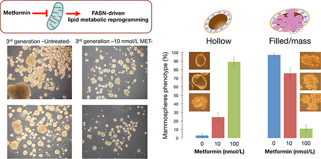 Indirect pharmacological inhibition of FASN promotes a phenotypic switch in breast tumorsphere architecture.