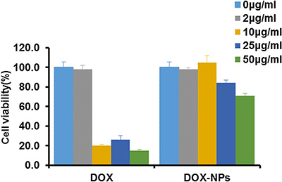 Macrophages viability after incubation with DOX or DOX-NPs for 12 h at 37°C.