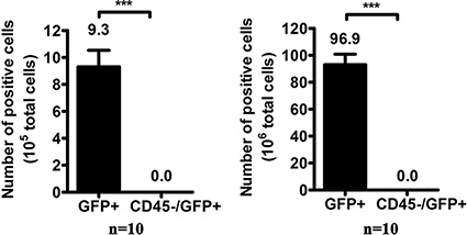 The number of GFP-positive cells per 106 white blood cells after oHSV1-hTERT-GFP infection.