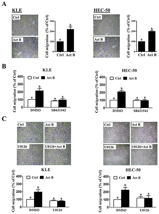 MEK-ERK1/2 signaling is required for activin B-induced cell migration.