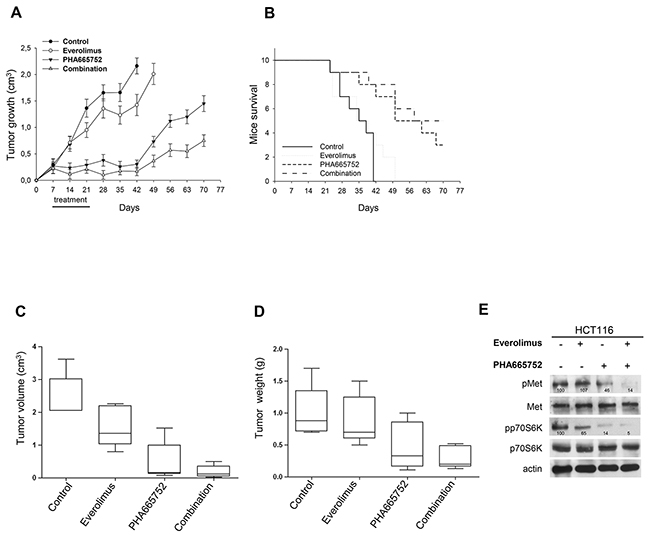 Inhibition of Met cooperate with everolimus in in vivo models of everolimus resistance.