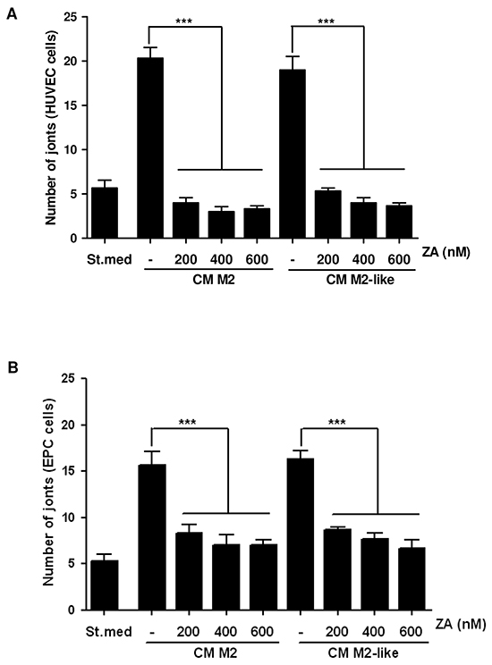 Treatment with ZA inhibits the M2/M2-like macrophages-induced pro-angiogenic effect.