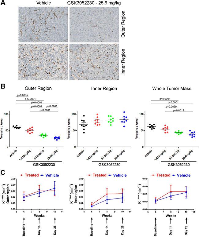 GSK3052230 reduces tumor vessel density in NCI-H226 xenografts.
