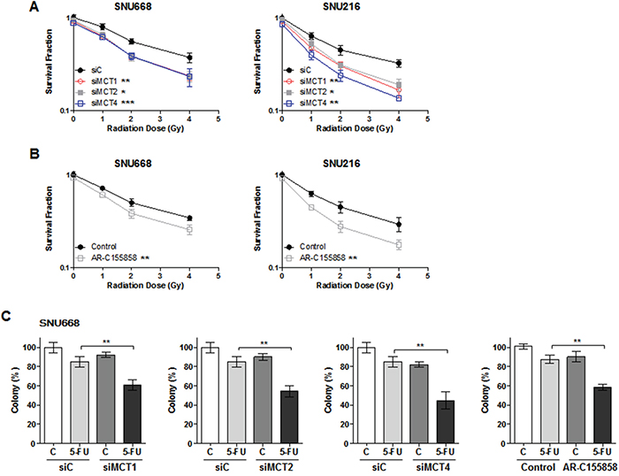 Synergism effect of MCT inhibition with anti-cancer therapy.