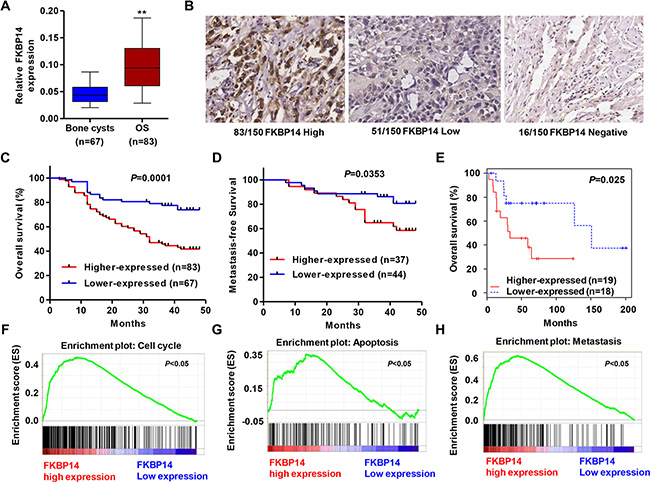 FKBP14 up-regulation in osteosarcoma tissues and regulates biological pathways.