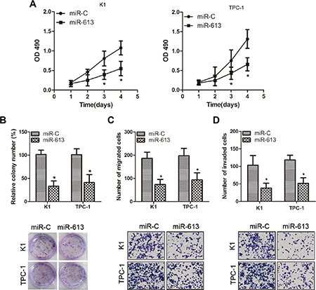 Overexpression of miR-613 suppresses proliferation, migration and invasion of K1 and TPC-1 cells.
