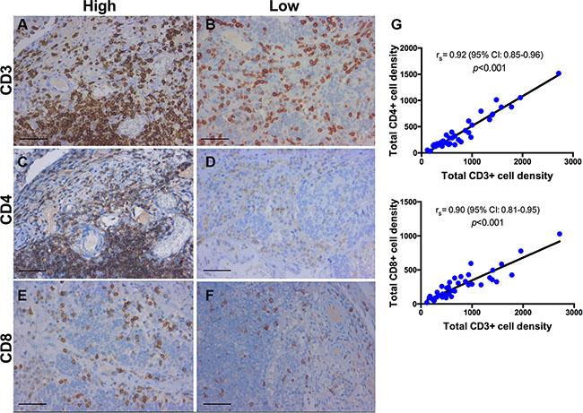 Immunohistochemistry for CD3+, CD4+, CD8+ T-cells.