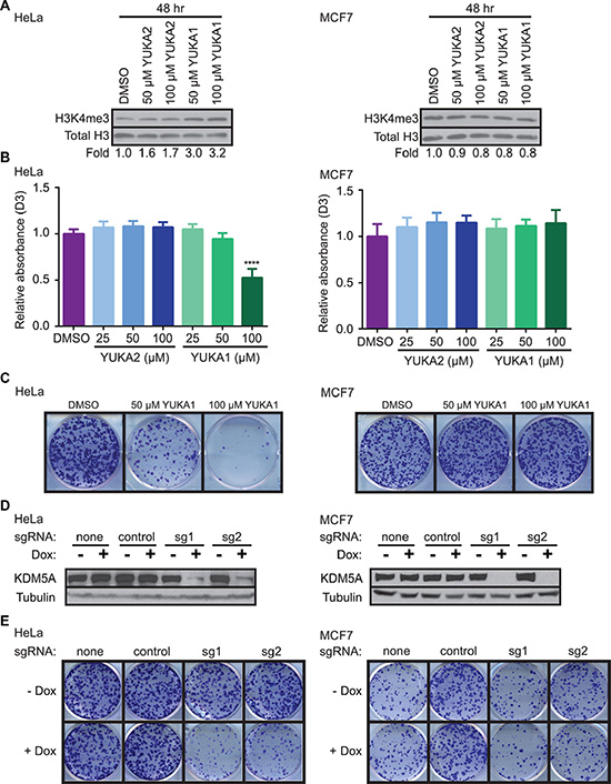 YUKA1 is cell-active and selectively inhibits proliferation of KDM5A-dependent cancer cells.