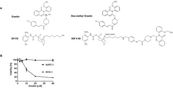 Chemical structures demonstrating the parental compounds and the novel drug conjugate SW V-49.