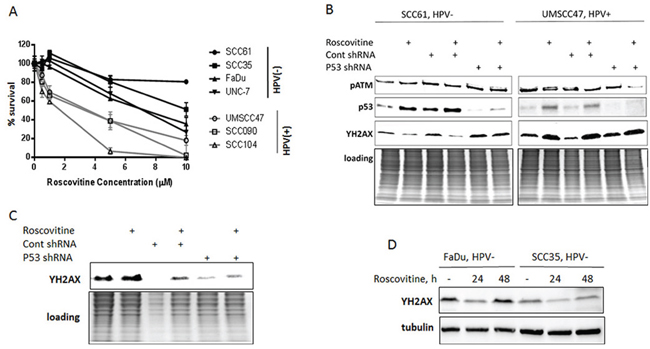 Oncotarget   Selective antitumor activity of roscovitine in head and