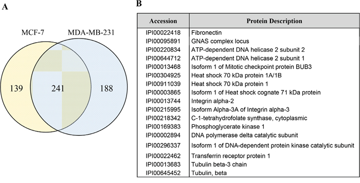 Identification of fibrinectin on extracellular vesicles (EVs) from breast cancer cells.