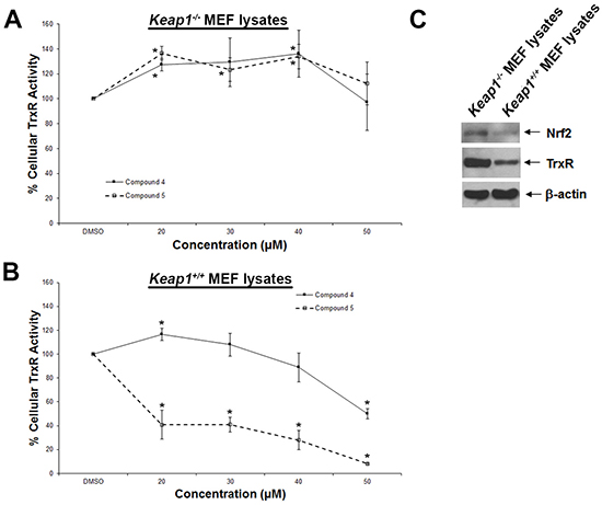 Dose-dependent effects of compounds 4 and 5 on TrxR activity in wild-type and Keap1-null MEFs.
