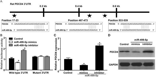 PDCD4 was verified as a direct target of miR-499-5p.