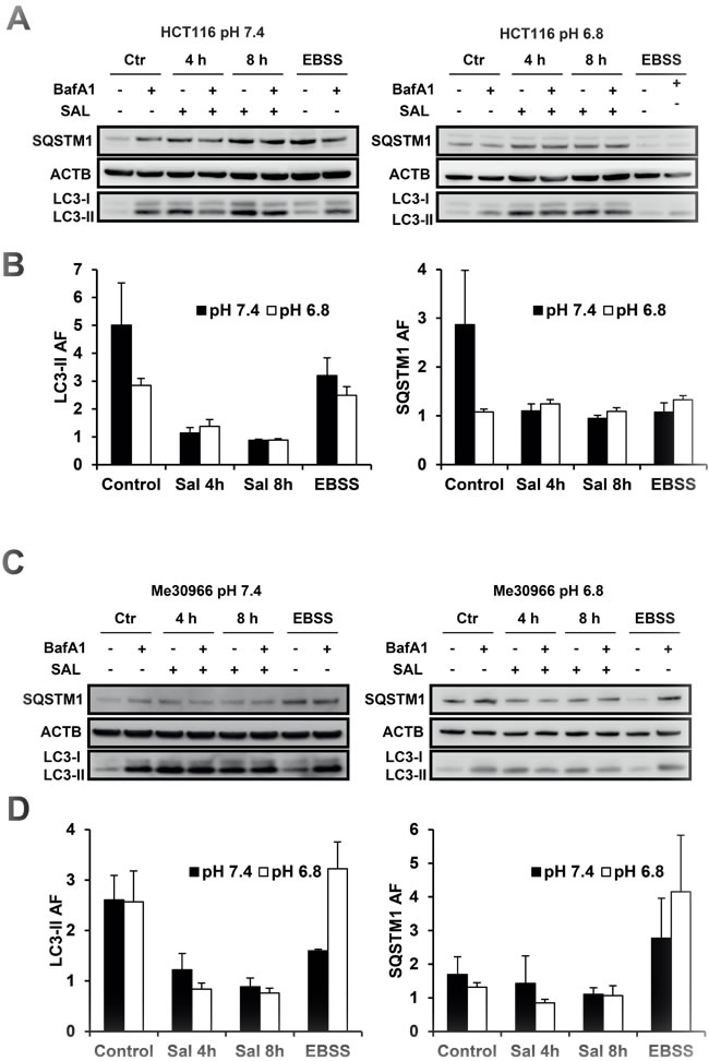 Effects of SAL on autophagic flux in cancer cell lines at pH 7.4 and 6.8.