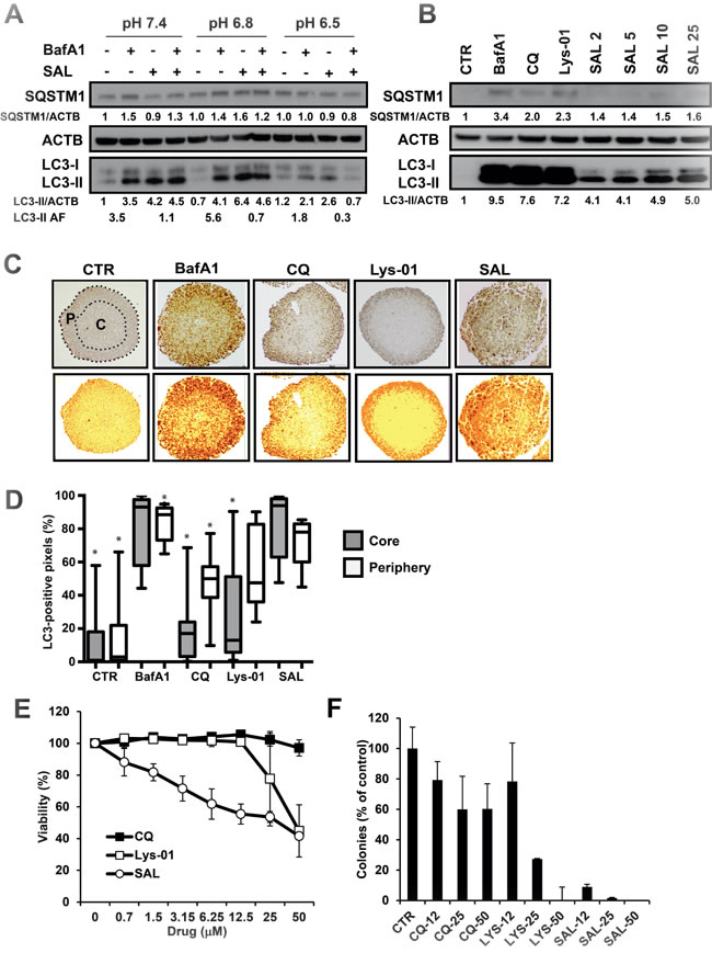 Effects of SAL on HCT116 cells at pH 6.5 and in multicellular spheroids.