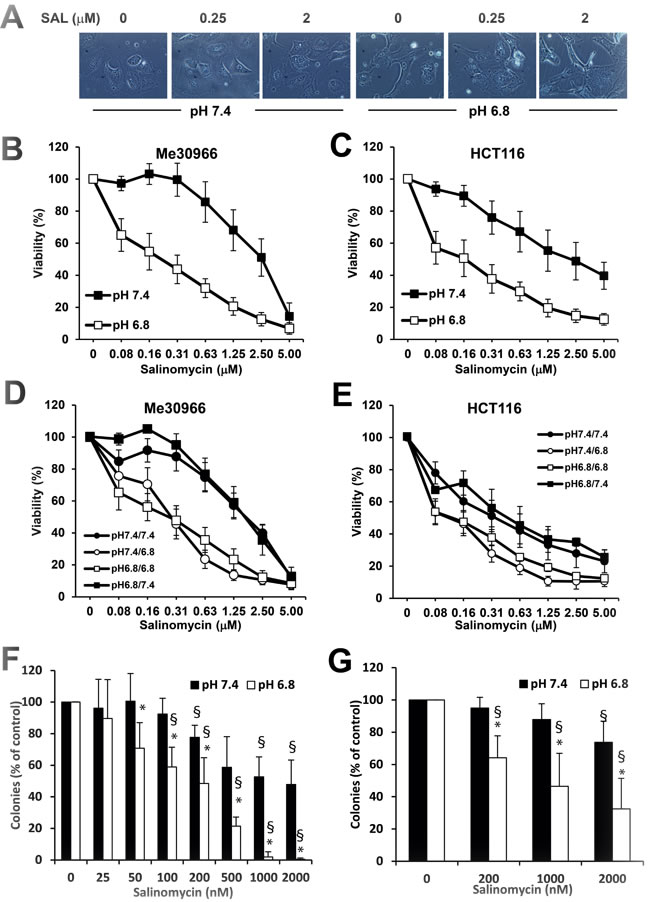 Cytotoxic activity of SAL on parental and acid-adapted HCT116 and Me30966 cells.