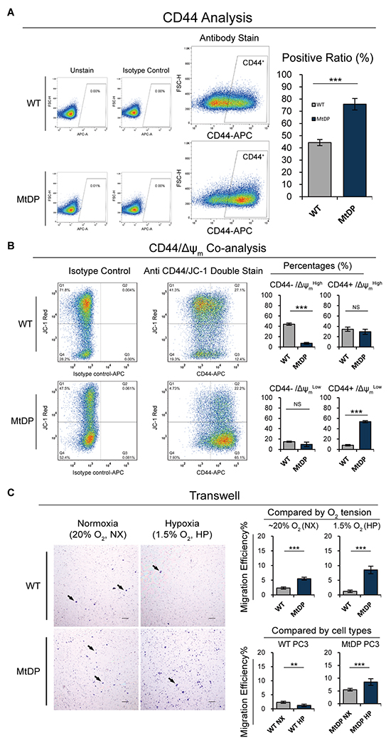 The flowcytometric CD44, CD44/Δψm co-analyses and transwell experiment results.