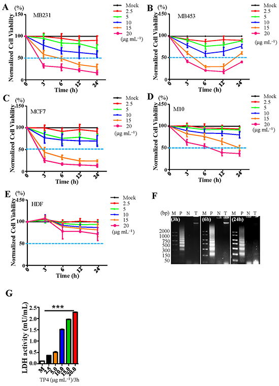 TP4 selectively kills breast cancer cells through inducing necrosis.