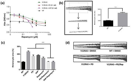 Synergistic effect of Rapamycin.