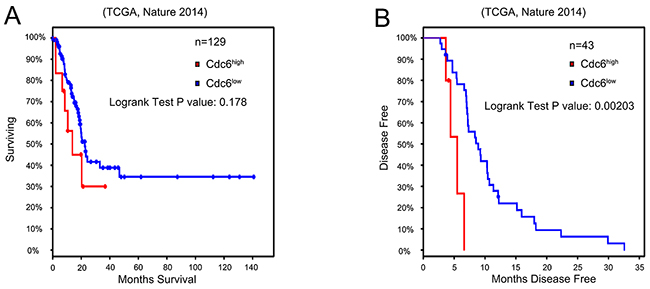 High Cdc6 expression is negatively related with prognosis of bladder urothelial cancer patients.