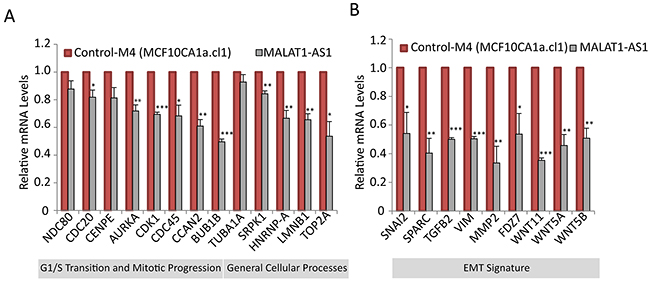 MALAT1 regulates the expression of genes involved in cell cycle progression and EMT signature.