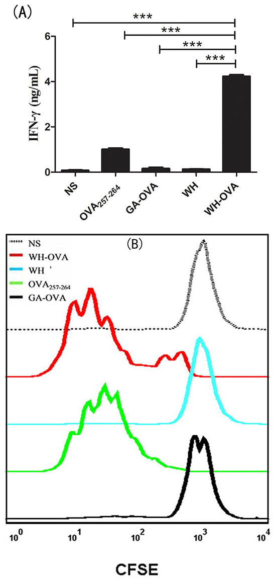 The effects of peptide WH on the cross-presentation of OVA257-264 by FL-DCs in vitro.