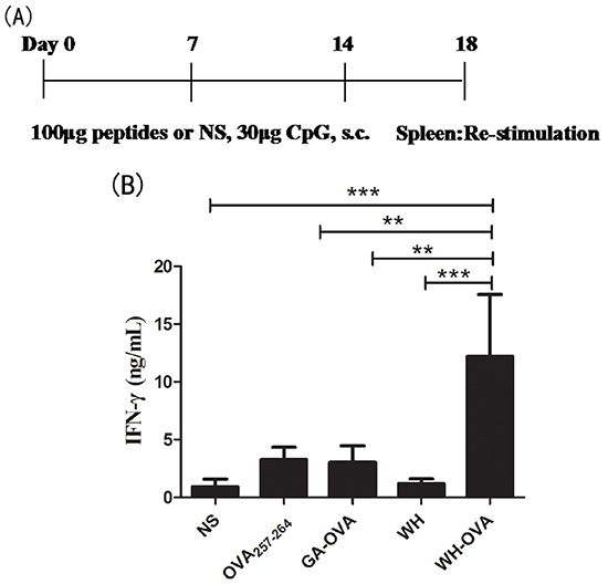 The effects of peptide WH on the cross priming of OVA257-264 specific CD8+ T cells in naïve C57Bl/6J mice.
