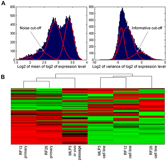 Unsupervised heat map of transcriptomics analysis, showing clustering of the primary and in vivo passaged samples and the AML cell lines.