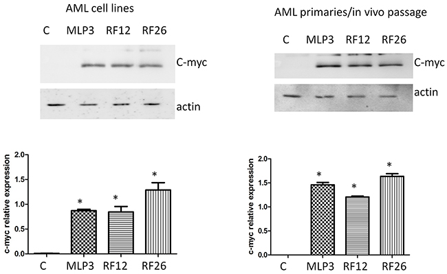 Western blot analysis of c-myc expression in the primary and in vivo passaged samples and the AML cell lines.