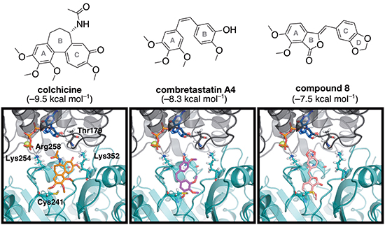The energy-minimized docking poses of colchicine (orange), combretastatin A4 (magenta) and compound 8 (pink) in the colchicine binding domain located at the interdimer interface between α-tubulin (grey) and β-tubulin (teal).