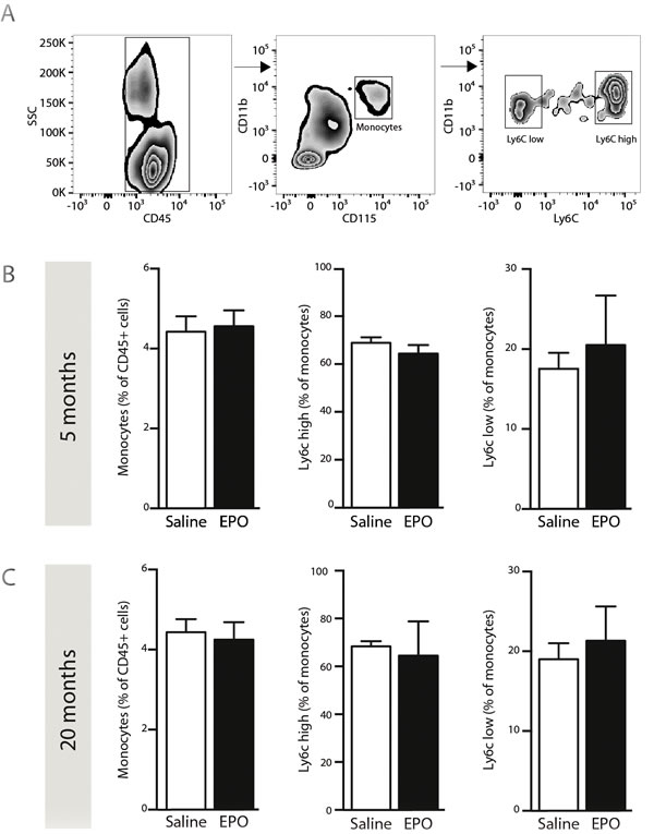 rhEPO administration does not affect blood-circulating monocyte populations.