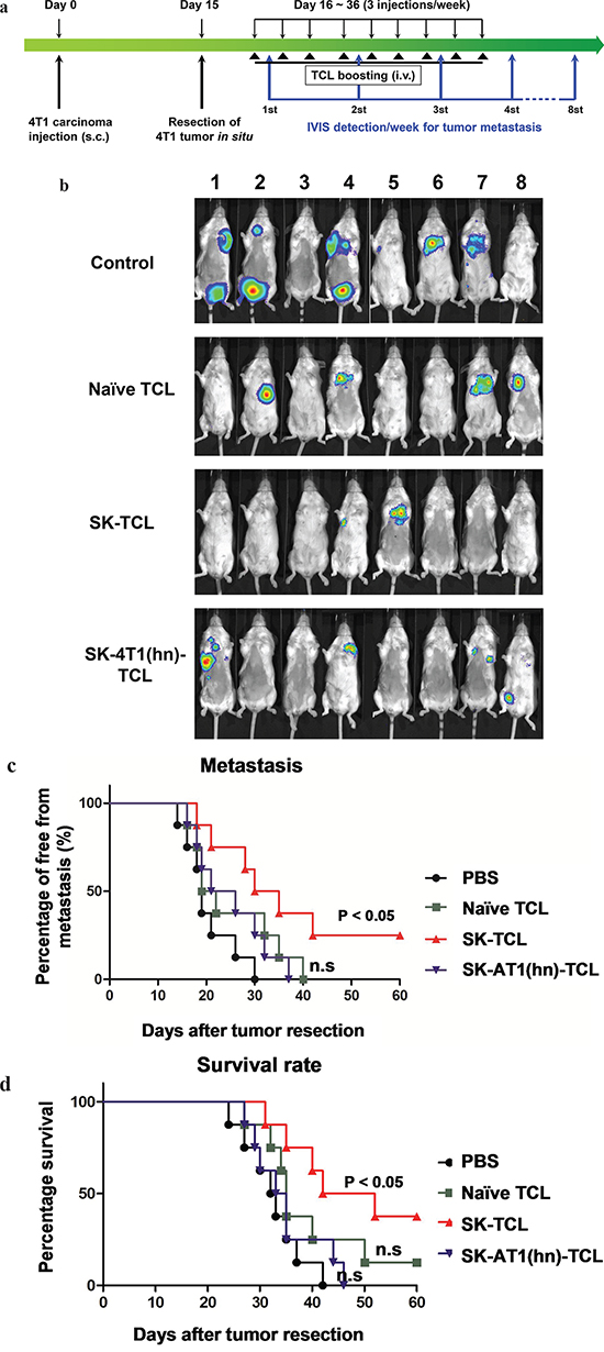 Anti-metastatic effect of SK-treated tumor cell lysate is mediated by the disruption of hnRNPA1 function.