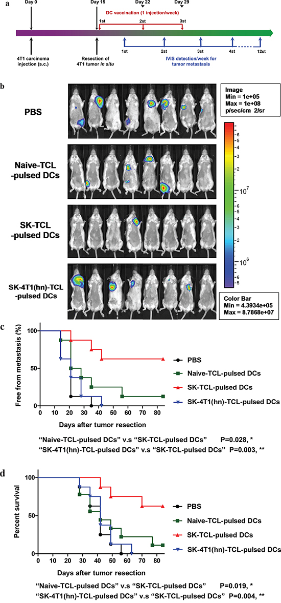 Anti-metastatic effect of SK-TCL-activated DC vaccines is mediated by the disruption of hnRNPA1 function.