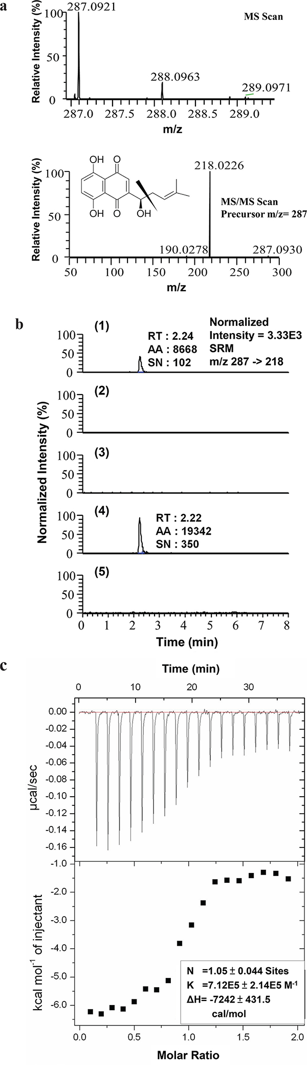 Evaluation of hnRNPA1 as an intracellular target of SK.