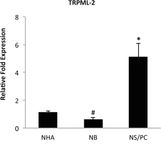 TRPML-2 mRNA expression in normal human brain, astrocytes and neural stem/progenitor cells.
