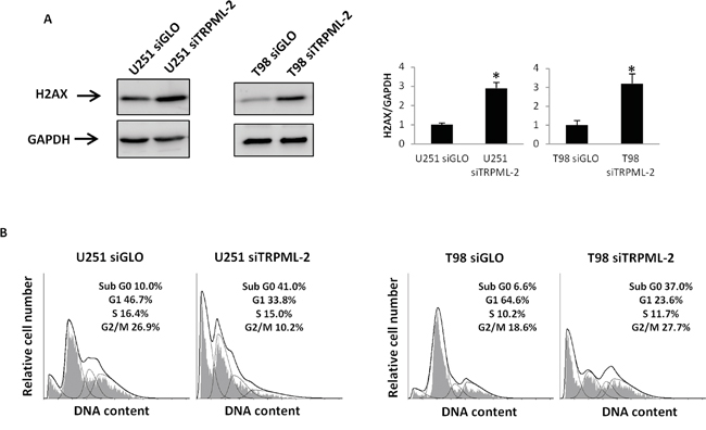 TRPML-2 silencing induces DNA damage and a subG0 cell phase increase in glioma cell lines.