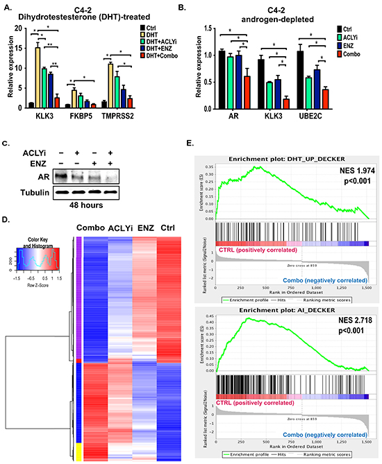 Combining ACLY and AR inhibitors suppresses AR target gene expression.