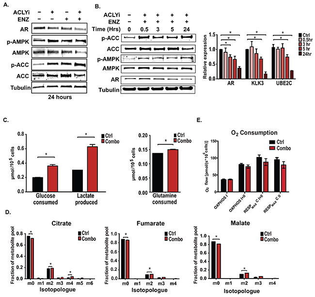 ACLY and AR inhibition promotes AMPK activation without suppressing glucose uptake or oxidation.