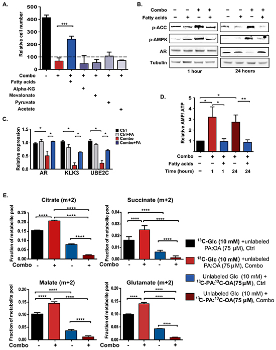 Fatty acid supplementation restores energetic homeostasis in ACLY/ AR inhibitor-treated cells, without directly supporting ATP production through β-oxidation.