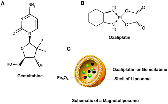 Chemical structures of Gemcitabine, Oxaliplatin and schematic of magnetoliposome.