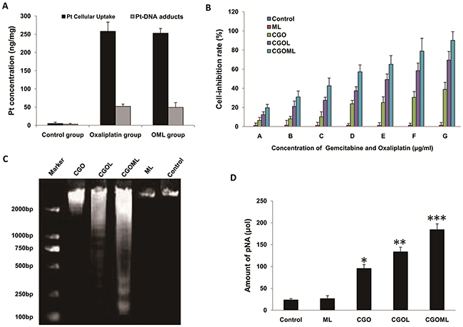 Cellular uptake of oxaliplatin, detection of platinum-DNA adducts and CGOML inhibit the growth of Breast cancer MCF-7 cells.