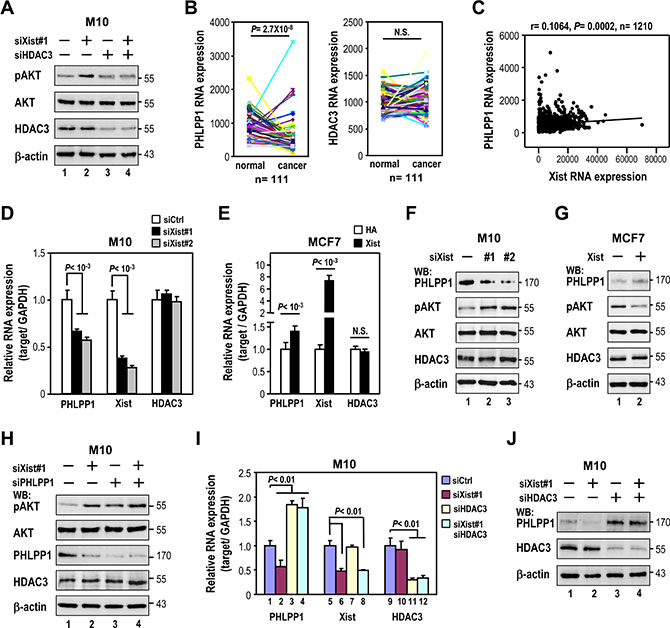 Xist knockdown-elicited AKT phosphorylation is via transrepression of PHLPP1 expression by HDAC3.