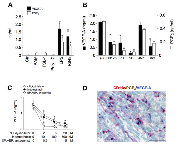 TLR-4-dependent expression of VEGF-A depends on endogenous PGE