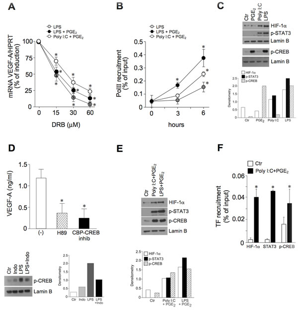 The pro-inflammatory VEGF-A transcription correlates with the activation of HIF-1α, STAT3 and CREB.