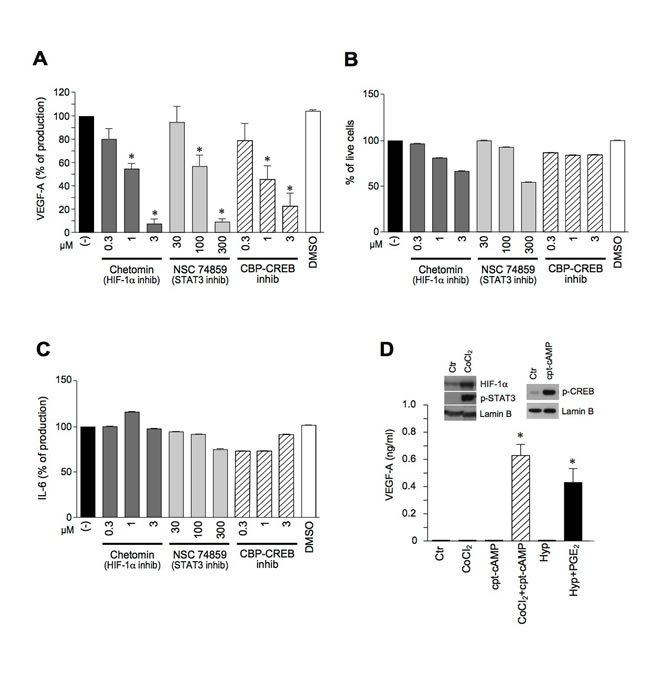 The pro-inflammatory secretion of VEGF-A requires the concomitant activation of HIF-1α, STAT3 and CREB.
