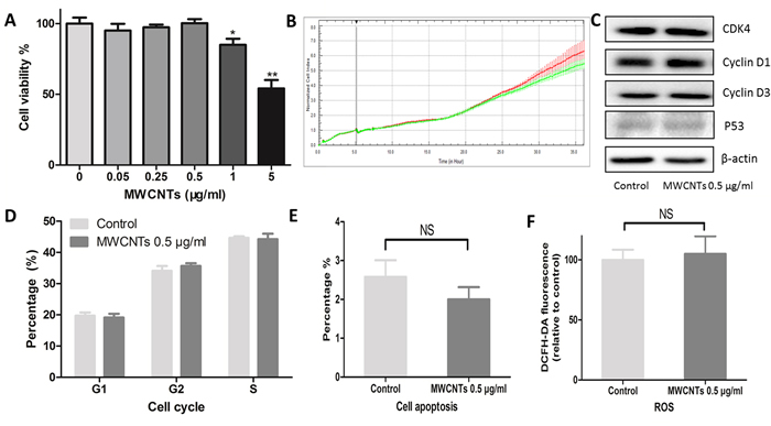 Cytotoxic responses of GC-2spd cells to MWCNTs.