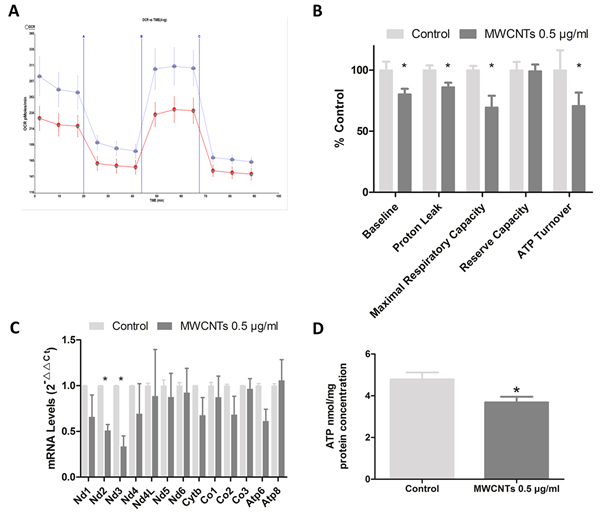 The mitochondrial functions after MWCNTs exposure to GC-2spd cells.