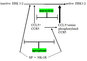 Schema showing relationship between CCR5 and neurokinin receptor (NK-1R) signaling operative in glioblastoma.